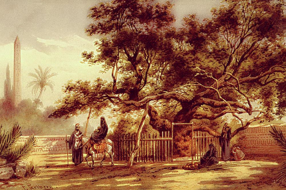 mary-tree