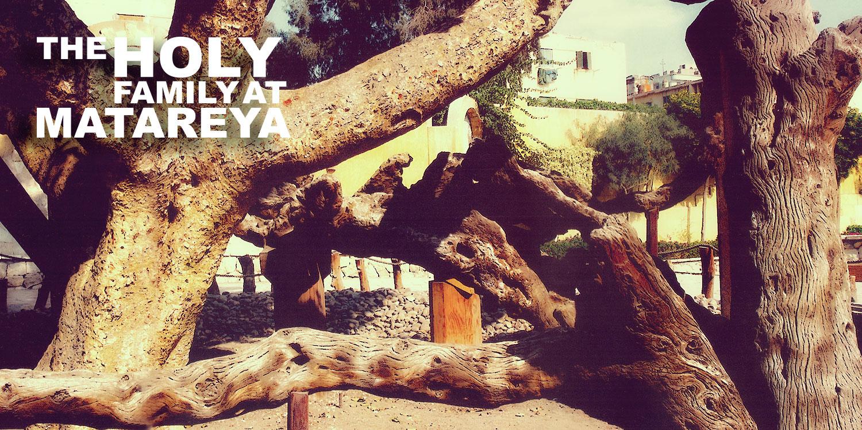 mary-tree2